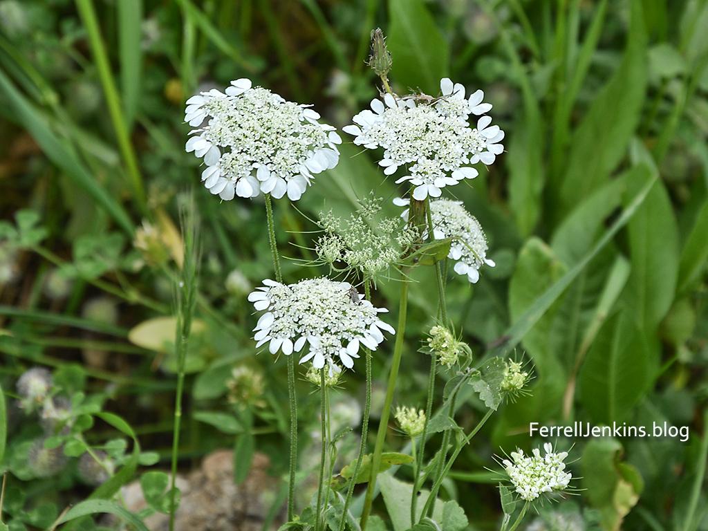 Spring flowers on Mount Gilboa. Photo: ferrelljenkins.blog.