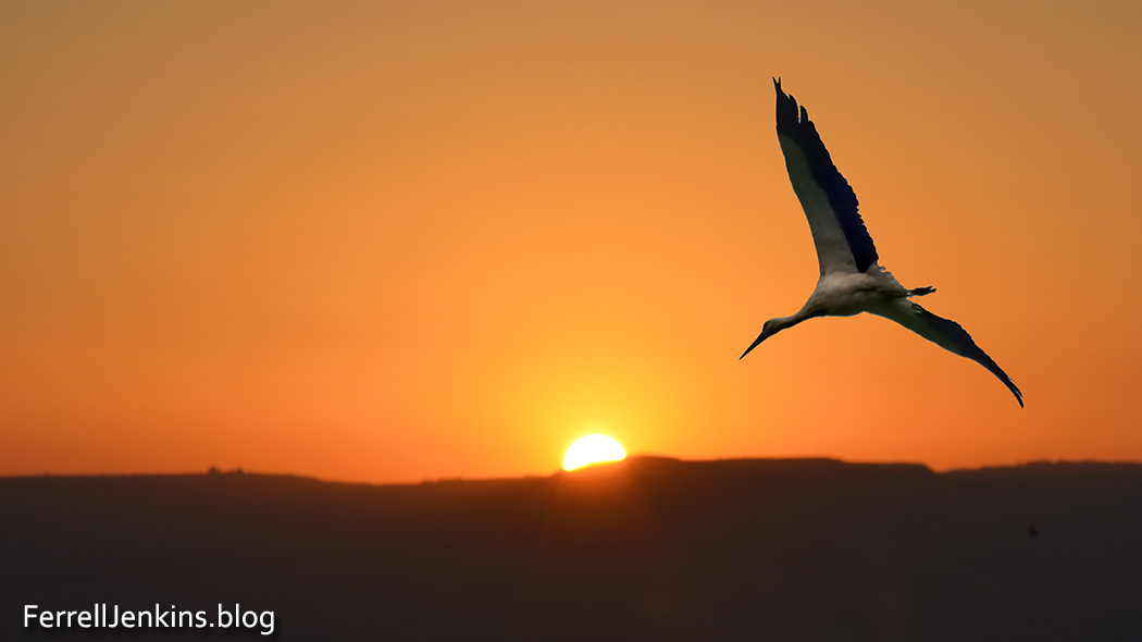 A stork heading north and a sunrise over the Golan Heights. Photo: ferrelljenkins.blog.
